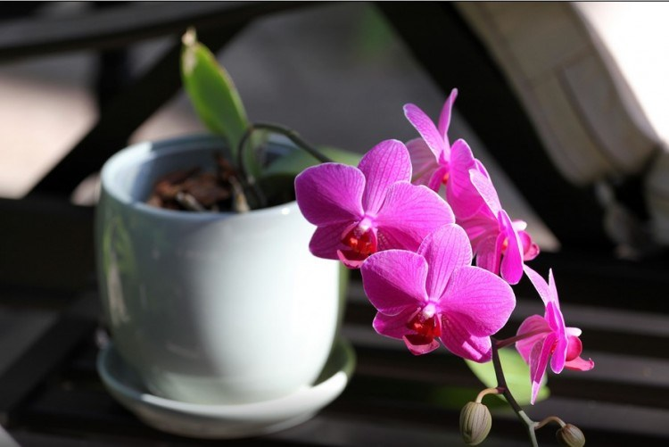 Cara Mudah Agar Bunga Anggrek Cepat Berbunga Tapalkudapost Com